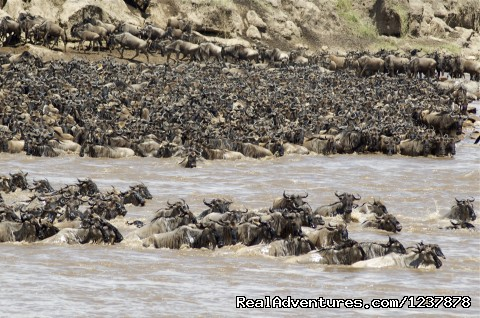 The Mara River crossing - Maasai Wanderings- The Great Migration