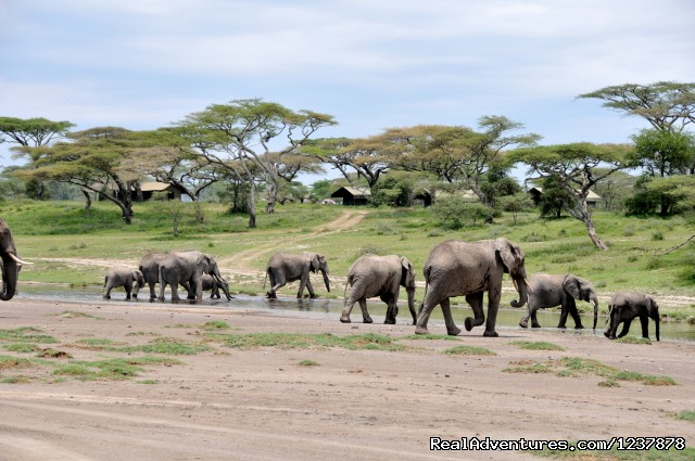 View the Ellies from our Luxury Camp (#13 of 14) - Maasai Wanderings- The Great Migration