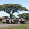 Mw's vehicles, back at the camp on the serengeti