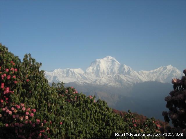 Trekking in Nepal, Nepal Trekking, Himalaya Trekki Annapurna Poon Hill Trekking