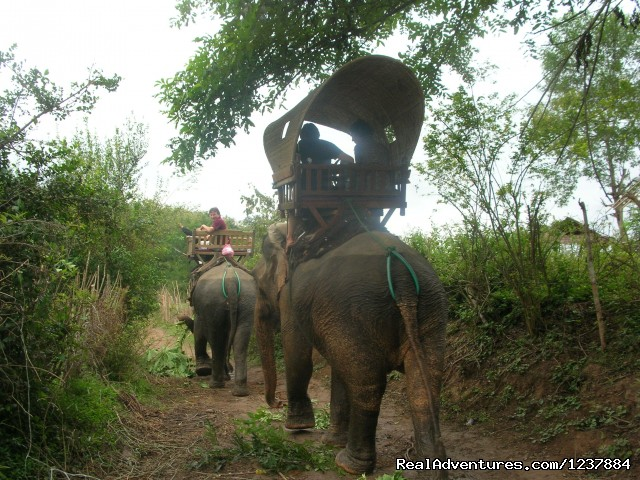- 1/2 Day Elephant Riding + Waterfall