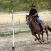 Horseback Riding - English and Western