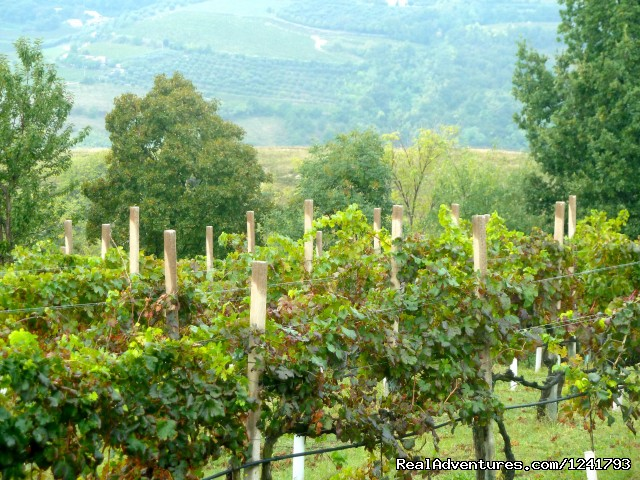 Vineyards in Prosecco - Primavera del Prosecco - Bike the Wine Roads