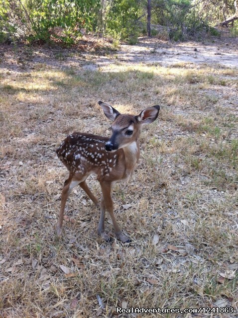 Fawn - Alamo River RV Resort