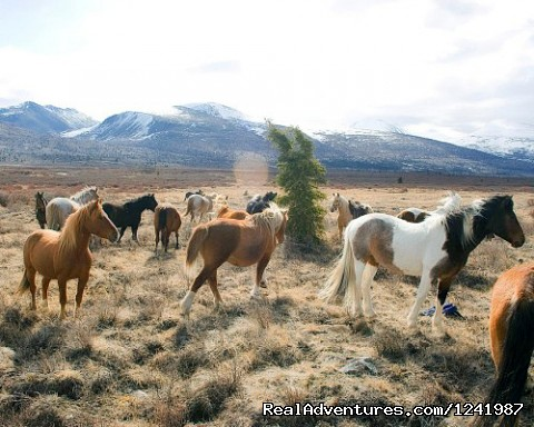 Wilderness Horseback Expedition in the Yukon of Canada (#17 of 25) - Wilderness Horseback adventure in the  Yukon
