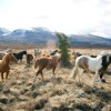 Wilderness Horseback Expedition in the Yukon of Canada
