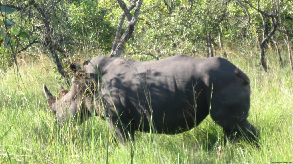 Rhinos in Ziwa breeding sanctuary | Image #6/7 | Explore wilds of Uganda the best in Africa