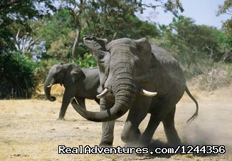 Elephants , Serengeti National Park (#15 of 25) - Join us Roika Tours for a lifetime experience