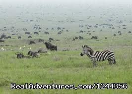 - Join us Roika Tours for a lifetime experience
