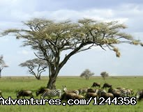 Image #21 of 25 - Join us Roika Tours for a lifetime experience