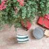Jaffa garden house