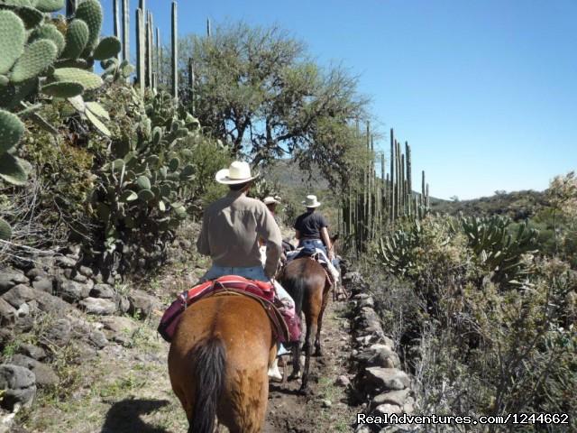 Image #5 of 26 - Rancho Las Cascadas