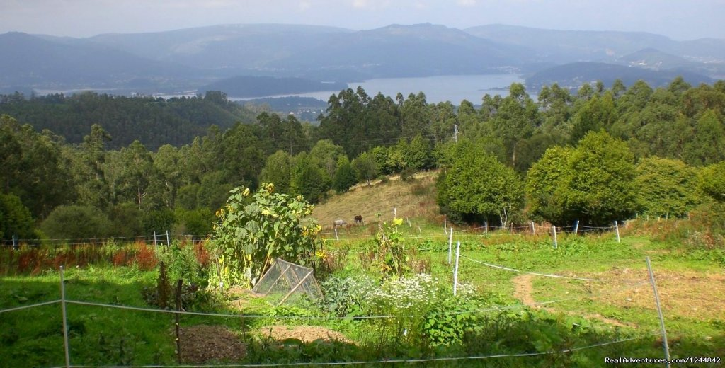 The veggie patch and paddocks | Image #9/17 | Rural retreat in Northern Spain- unique location