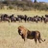 Serengeti Tanzania