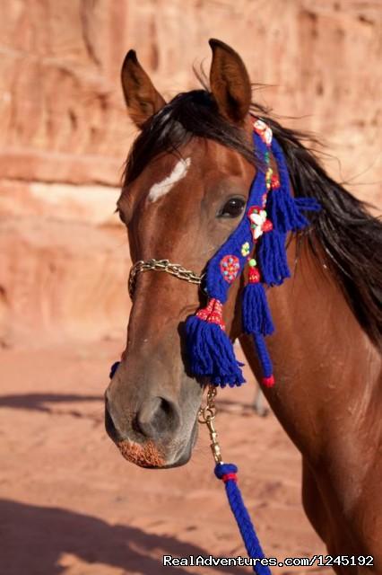 Badia Tours & Stables - Arabian Horse (#17 of 25) - Horseriding in Wadi Rum Desert with Arabian horses
