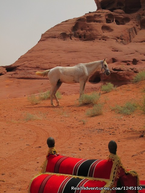 Badia Tours & Stables - Horse at lunch camp - Horseriding in Wadi Rum Desert with Arabian horses