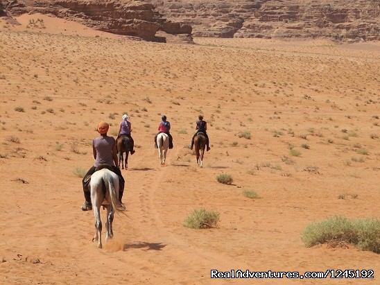 Badia Tours & Stables - Trailrides - Horseriding in Wadi Rum Desert with Arabian horses