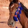 Badia Tours & Stables - Arabian Horse