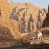 Badia Tours & Stables - Sunrise in desert