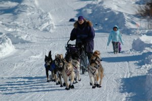 Iditarod Sled Dog Race Tours & Arctic Adventure Wasilla, Alaska Dog Sledding