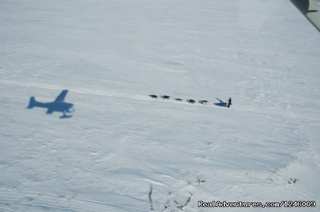 Flying over musher Cain Carter  - Iditarod Sled Dog Race Tours & Arctic Adventure