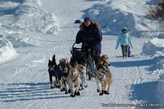 Iditarod Sled Dog Race Tours & Arctic Adventure