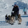 Iditarod Sled Dog Race Tours & Arctic Adventure Musher arriving in Elim