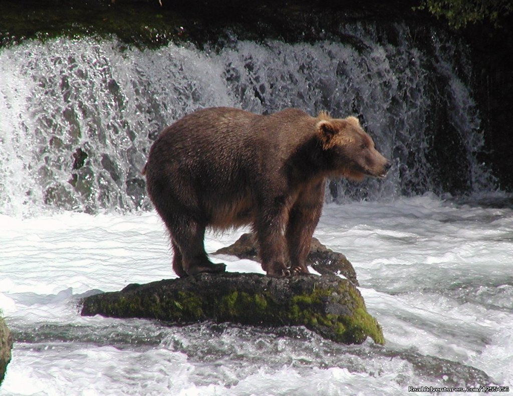 Coastal Brown Bears | Image #9/26 | Unique Lodging and Exciting Adventures in Alaska