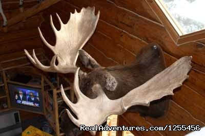 Wise Old Hunter Lodge | Image #12/26 | Unique Lodging and Exciting Adventures in Alaska