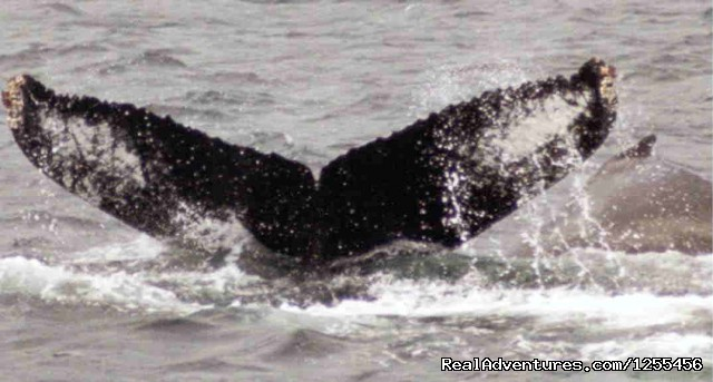 Unique Lodging and Exciting Adventures in Alaska Humback Whale
