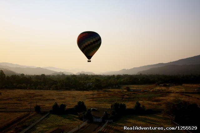 Calistoga Balloons Over Napa Valley at Harvest - Calistoga Hot Air Balloons of Napa Valley