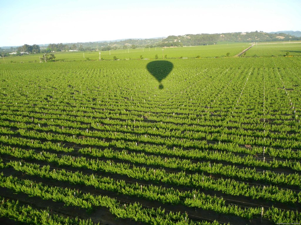 Out over the vineyards | Image #1/13 | Healdsburg, California  | Ballooning | Up & Away Ballooning