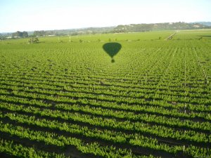 Up & Away Ballooning Ballooning Healdsburg, California