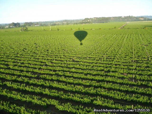 Out over the vineyards (#1 of 14) - Up & Away Ballooning