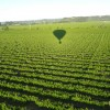 Up & Away Ballooning Santa Rosa, California Ballooning