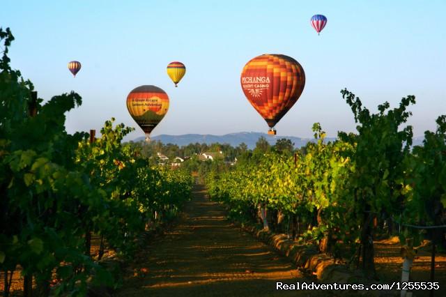 A Grape Escape Hot Air Balloon Adventure Wine country flight over grape vines