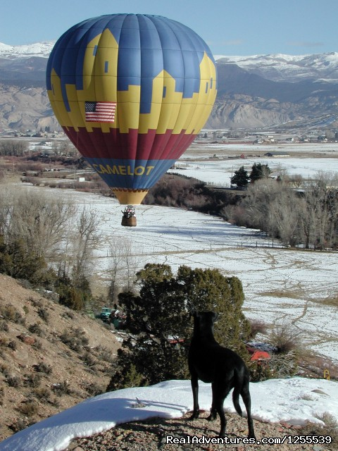 Image #4 of 6 - Camelot Balloons