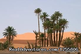 Marrakechsafari Offre Tours around Morocco.: Marrakechsafari