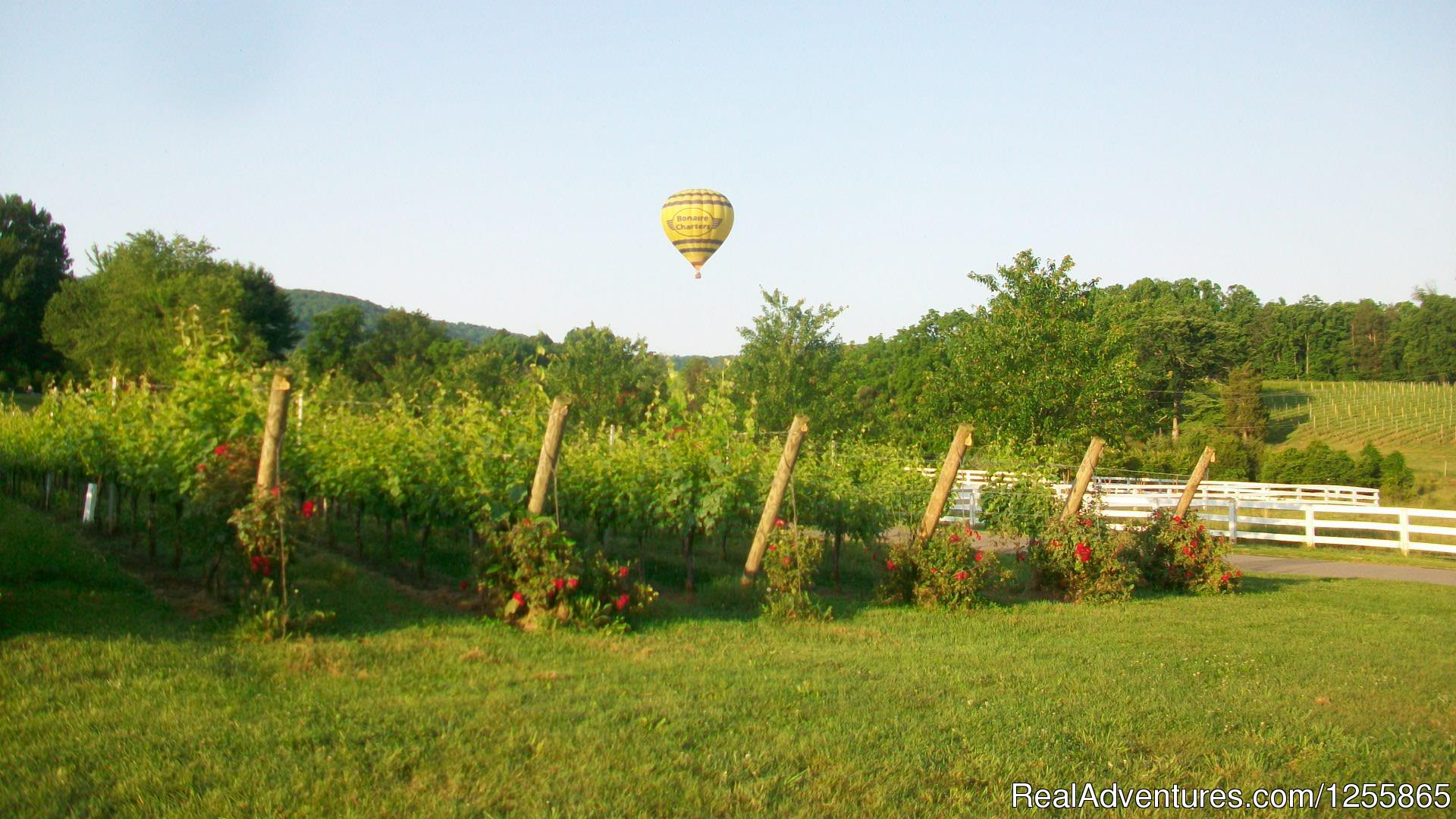 Barboursville Vineyard- A local favorite