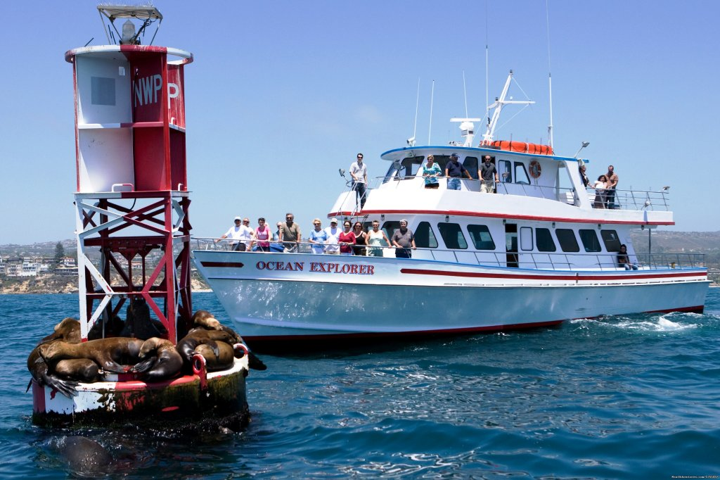 Come and join us on one of our 2 ½ hour whale watching cruises! We have a 96% success rate of marine life viewings on each cruise.