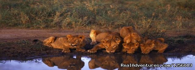 South Africa Tours & South Africa Safari - Romantic and weekend tours in Africa