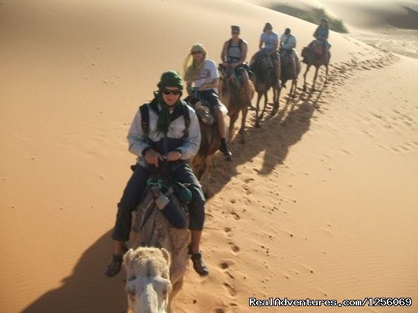 Camel trekking programs. - Zebra Adventures Cultural Tours