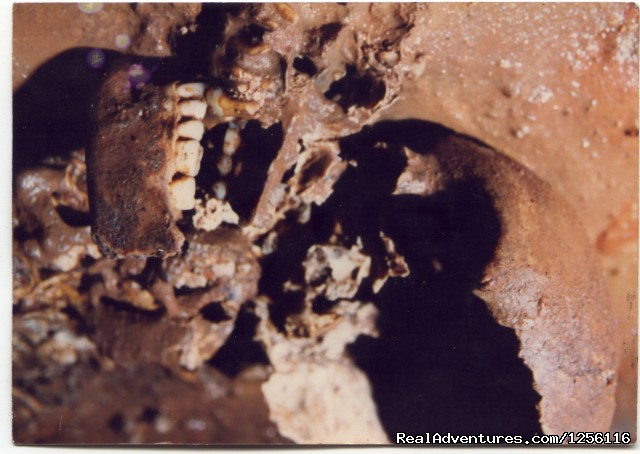 Skull Of Ancient Cave Explorer - Active Cave Exploration