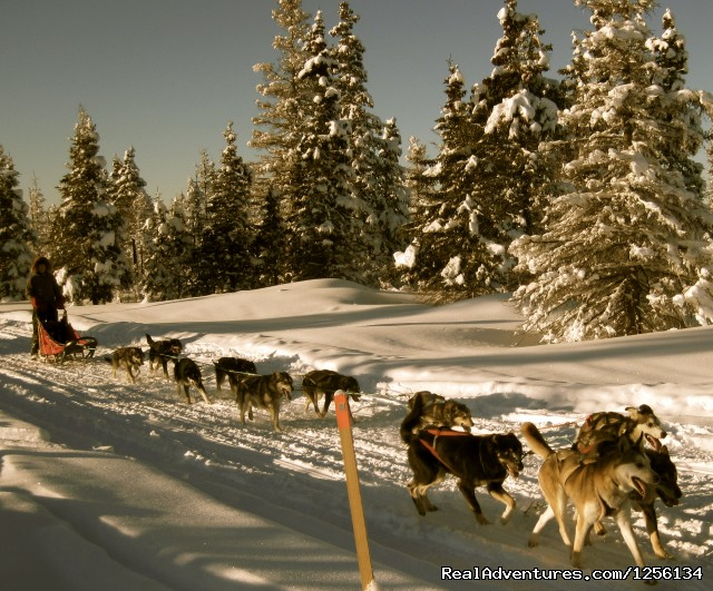 Sled Dog Rides, Tours or Race Your Own Team