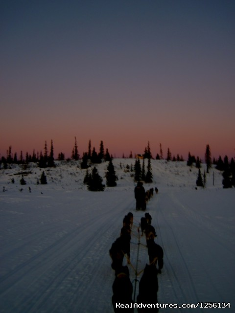 view from the back of the sled - Sled Dog Rides, Tours or Race Your Own Team