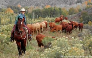 Family Vacations and Retreats Loveland, Colorado Dude Ranch