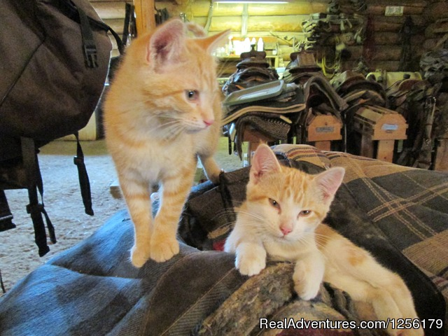 Simba and Cricket - Waunita Hot Springs Ranch