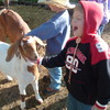 Kid's love the petting zoo