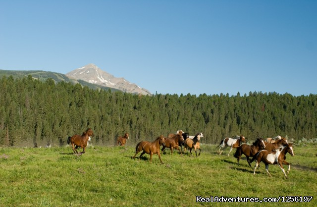 Running the Herd below Lone Peak - Lone Mountain Ranch