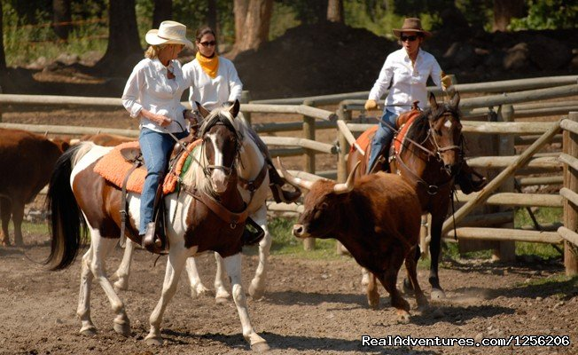 Team Penning | Image #4/5 | Mountain Sky Guest Ranch